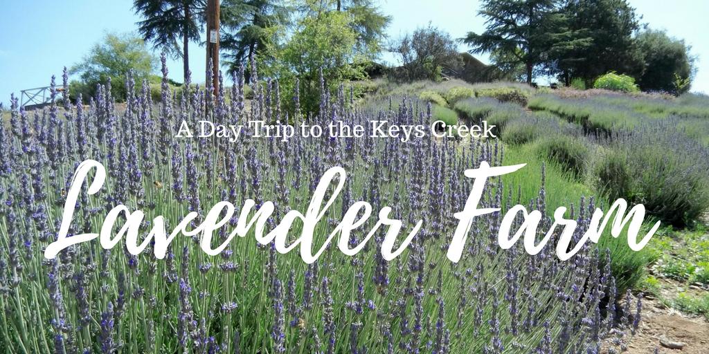 A Day Trip to Keys Creek Lavender Farm