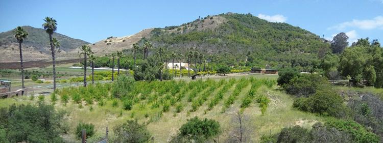 Keys Lavender Farm