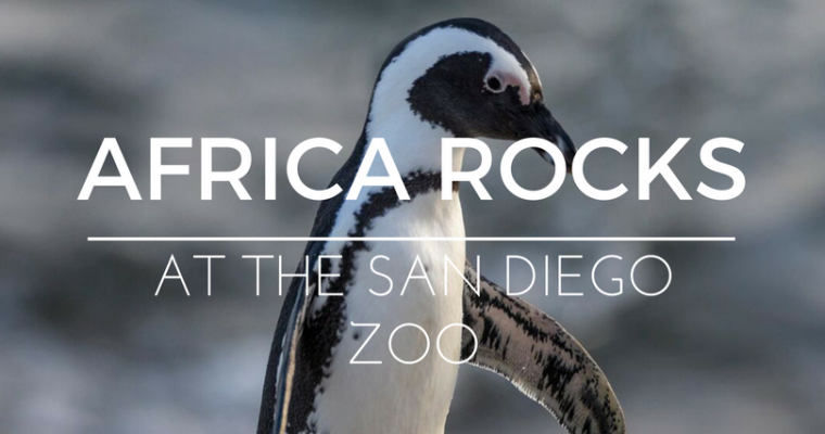 Africa Rocks at the San Diego Zoo