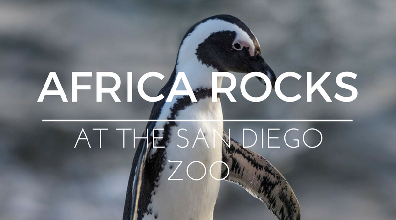 Must See: San Diego Zoo's New 'Africa Rocks' Habitat Exhibits
