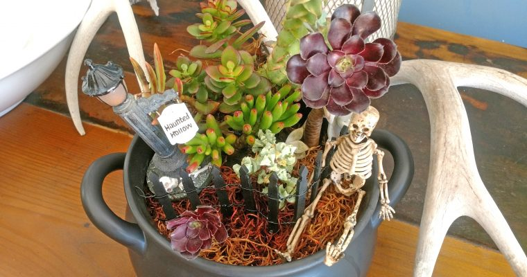 Spooky Succulent Bowl Tutorial