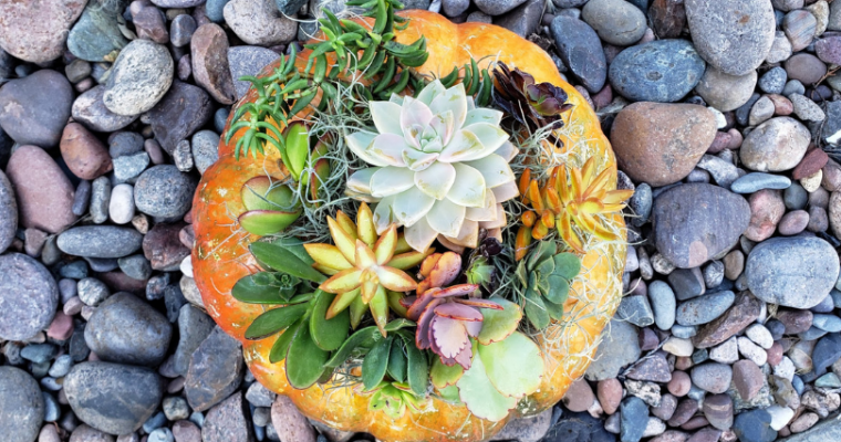 Fall Succulent Pumpkin Decor Tutorial