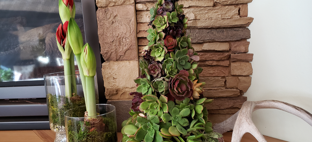 Succulent Christmas Tree Tutorial