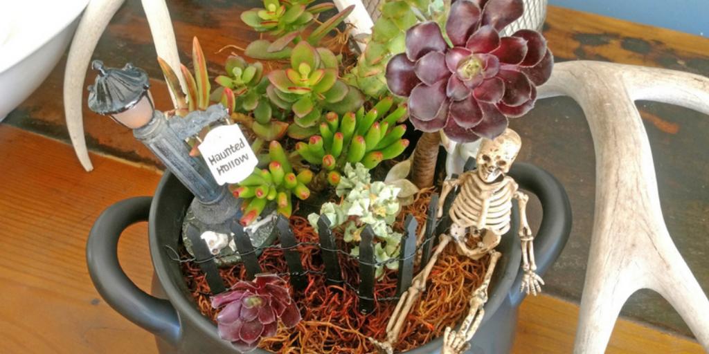 Spooky Succulent Bowl
