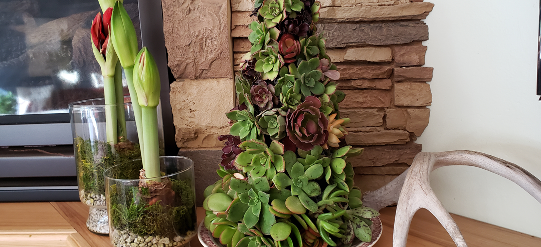 Succulent Tree DIY