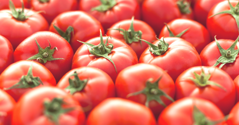 Why are tomatoes red?