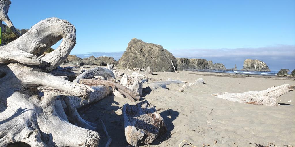 oregon beach drift wood
