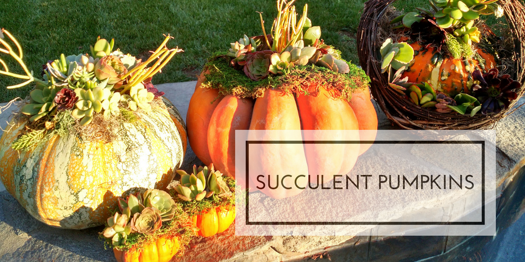 Succulent Pumpkins for Fall