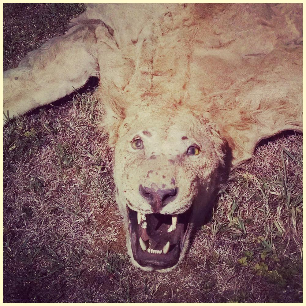 Lion Rug That Bites